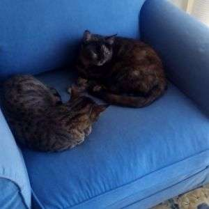 Benedetta baby sitter a Capolona